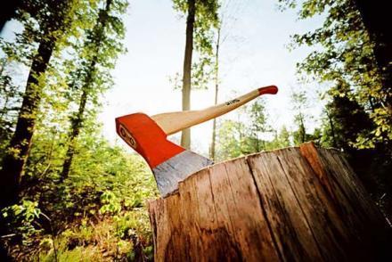 Прокуроры поймали подельника «лесного рэкетира» Януковича