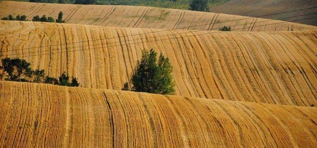 Европарламент заблокировал квоты на украинскую пшеницу и томаты