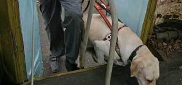 В Киеве на Бортничах отравили собаку-поводыря, инвалид лишился единственного друга