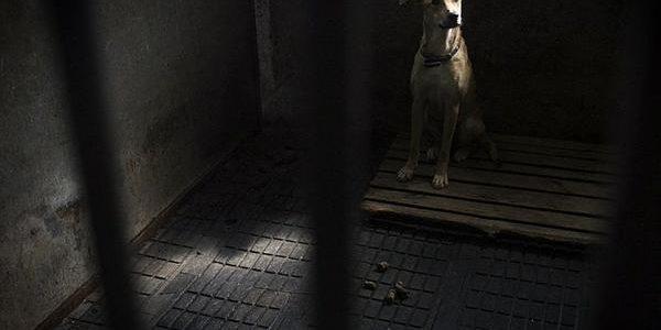 Собачі пристрасті. Нові аспекти захисту тварин від жорстокого поводження