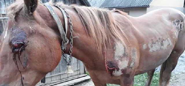 На Закарпатье пьяный живодер привязал коня к машине и волок его по селу
