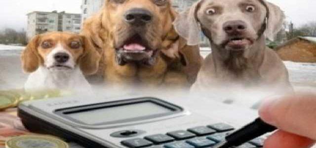 В Украине хотят поставить на учет всех животных, а нарушителей – штрафовать
